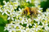 Bee macro in green nature - Stock Image