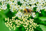 Bee macro in green nature - Stock Image