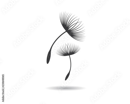 Dandelion vector illustration design - 238648065