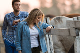 Couple in love enjoy day in nature and horses - 238710692