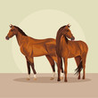 Horses farm animal