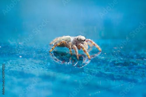 spider - 238742252