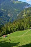 Mountain grassland view of Wengen mountain village in Lauterbrunnen region in Switzerland.