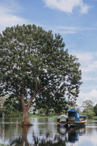 Foto Murales Big Tree in Amazon River