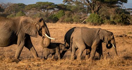 Elefanten in Kenia © spuno