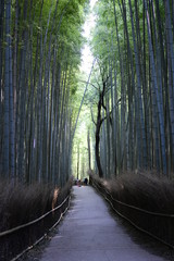 Arashiyama Bamboo Grove, Sagano Forest, Kyoto, Japan