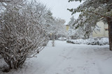 Covered with snow, view of the garden and trees.