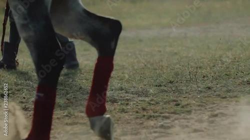 Arabian horse on training