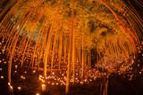 竹林の小径ライトアップ(小机城址市民の森) © kanzilyou