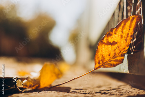 Autumn leaf on the ground in the sunlight - 238910625