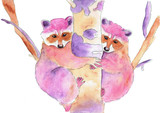 Hand painting watercolor illustration of a raccoons on a tree. Colorful illustration isolated on white background.