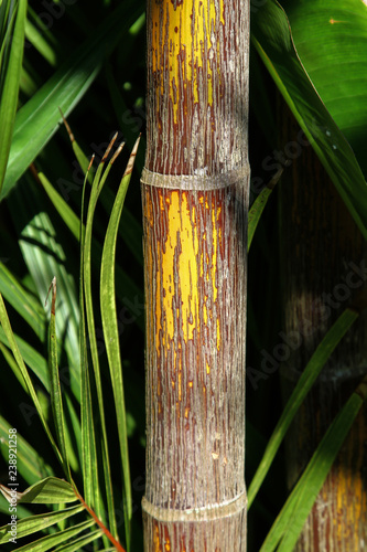 Details of a bamboo trunk and leaves