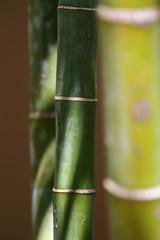 Details of bamboo trunks © jokuephotography