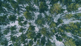 Aerial view of trees in the snowy winter forest