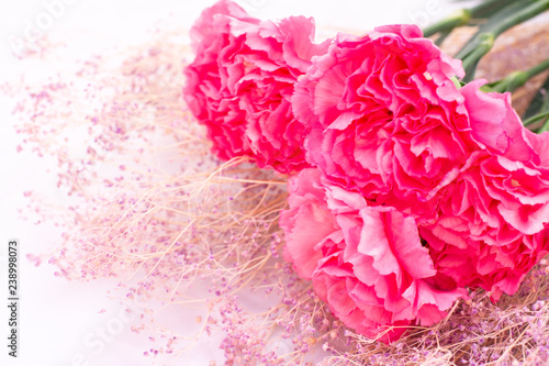 Pink carnation flowers - 238998073