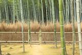 京都の竹林と竹垣 © sonda0112