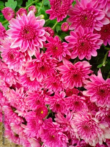 Flower garden vol.81 - 239038019