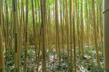 La bambouseraie de la Roque Gageac © Sylvain TANGUY