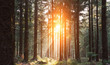 Leinwanddruck Bild - Silent Forest in spring with beautiful bright sun rays