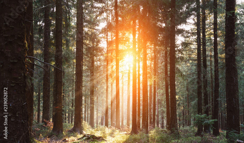 Leinwanddruck Bild Silent Forest in spring with beautiful bright sun rays
