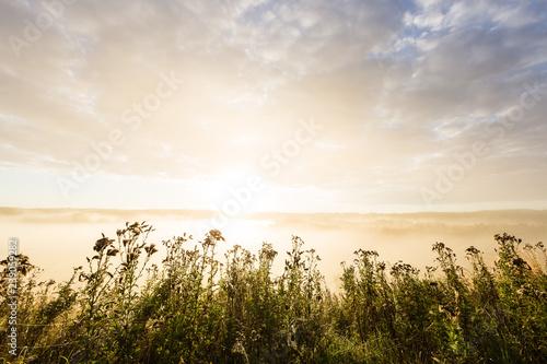 Mokra łąka w ranek mgle, Höhenrain, Bavaria, Niemcy.