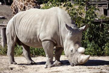 rhino in Zoo