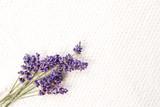 Bunch of fresh purple lavender flowers on white textured linen background