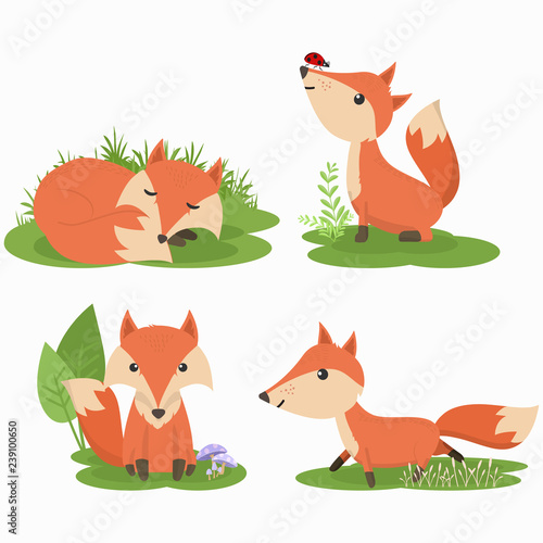 obraz PCV Set of cute fox cartoon character illustration