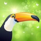 Toucan on the green backgrounds