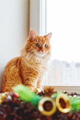 Cute ginger cat sitting on window sill near handmade Christmas wreath. Fluffy pet and craft New Year decoration.