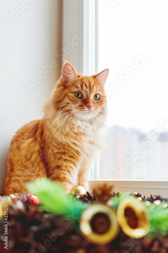 Cute ginger cat sitting on window sill near handmade Christmas wreath. Fluffy pet and craft New Year decoration. - 239211059