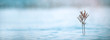 Leinwanddruck Bild - snowy Winter Background
