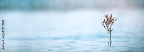 Leinwanddruck Bild snowy Winter Background