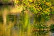 Leinwanddruck Bild - Goldener Herbst