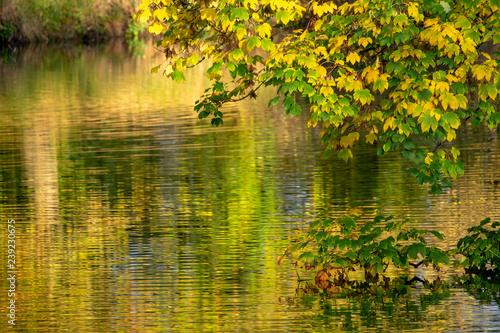 Leinwanddruck Bild Goldener Herbst