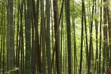 山の公園の竹林の風景1 © ken1344