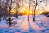 Fototapeta Na ścianę - Red sunset in frozen winter forest © sborisov