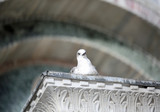curious seagull looks at the photographer from above a column