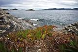 presqu'ile de Giens - sentier littoral © minicel73