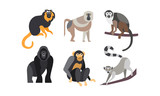 Collection of monkeys, different breeds of monkeys vector Illustration on a white background