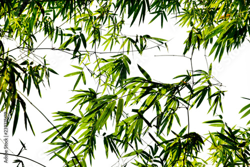 Branches and leaves of bamboo on white background