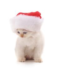 Kitten in Christmas hat. © voren1