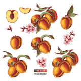 Set of hand drawn peach fruits, branches, flowers and sliced pieces. - 239449885