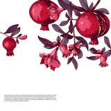Pomegranate background with flowers and fruits. - 239451426