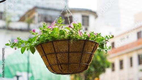 Foto Murales Flower