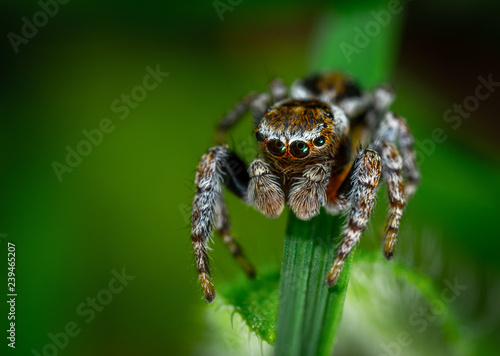 spider on a leaf - 239465207