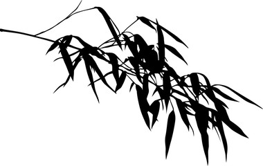 one black long bamboo isolated lush branch