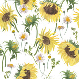 Watercolor painting summer pattern with sunflowers and camomile flowers  on a white background