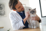 Handsome vet looking at beautiful cat in vetinarian clinic