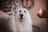 afghan hound dog christmas
